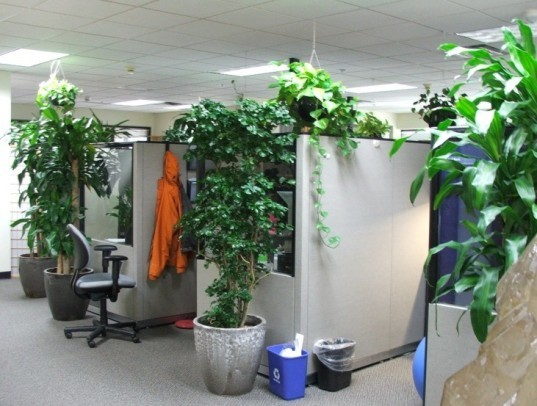 9 Low Maintenance Plants For The Office Inhabitat Green Design Innovation Architecture Building