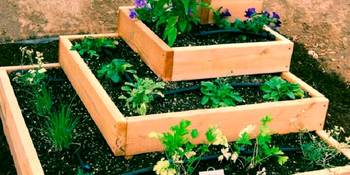 5 verduras para plantar en casa cortaporlosano - El huerto en casa ...