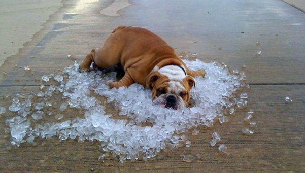Cómo tratar los golpes de calor