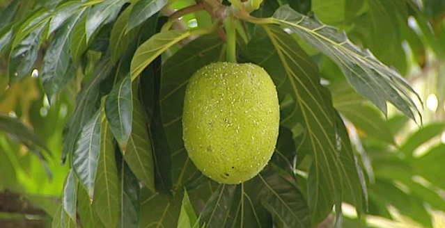 Los sorprendentes beneficios del fruto del baobab