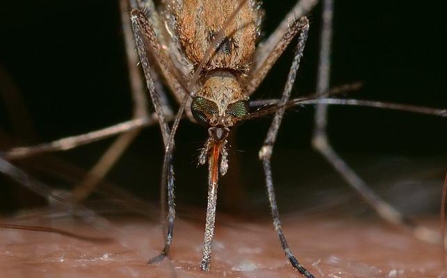Asciende el números de casos de zika en España