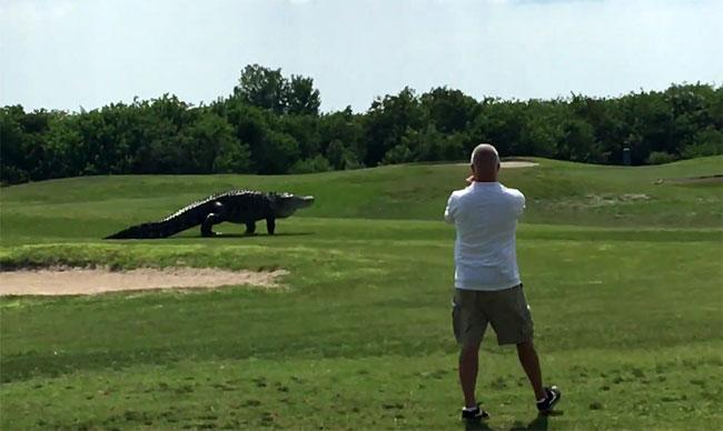 Un hombre se corta los genitales en Florida y se los lanza a un caimán