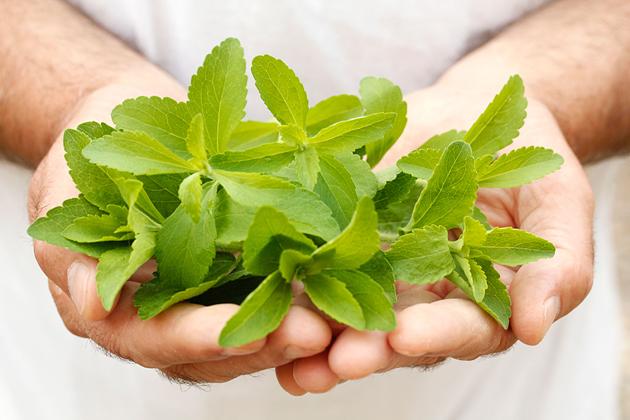 ¿Cuáles son las contraindicaciones de la stevia