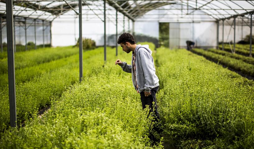 Mentiras de la stevia: ¿es verdad todo lo que leemos de ella?