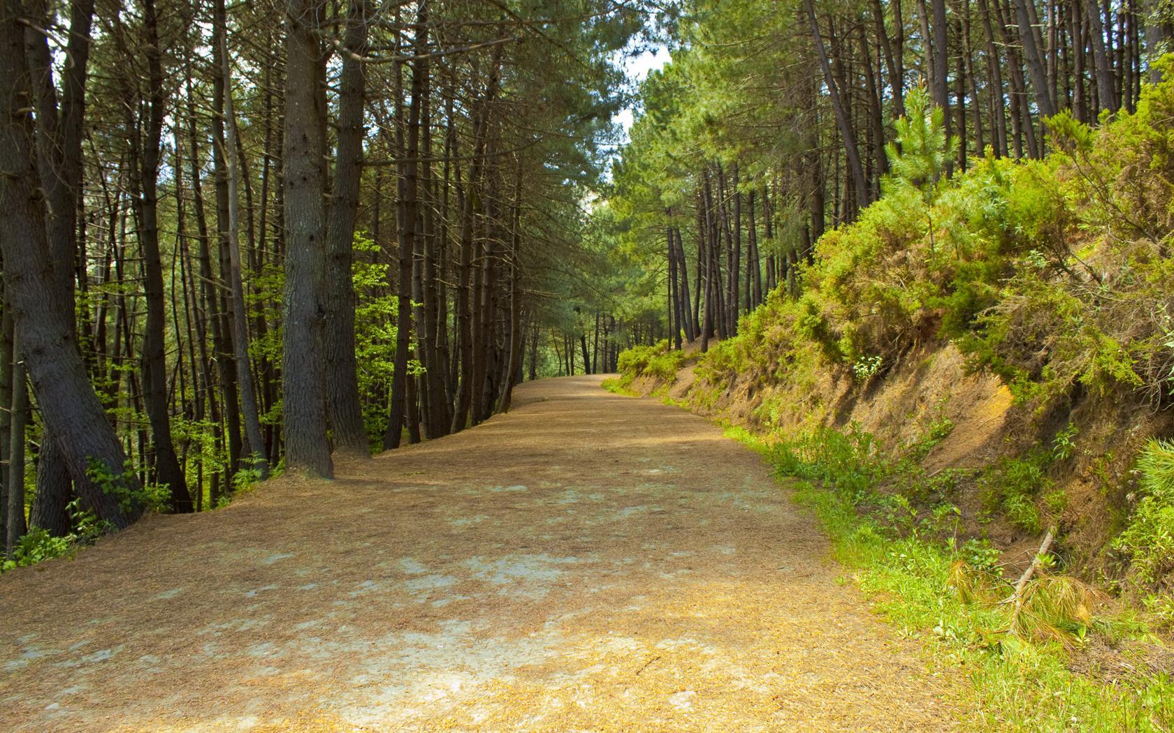 Así cambia tu cerebro después de un paseo por la naturaleza