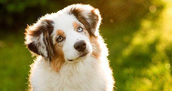 El 2027 ya podrás hablar con tu perro