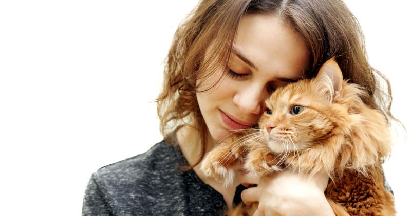 salud gato