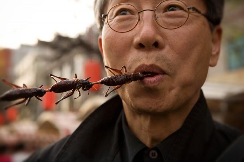 europa permite comer insectos
